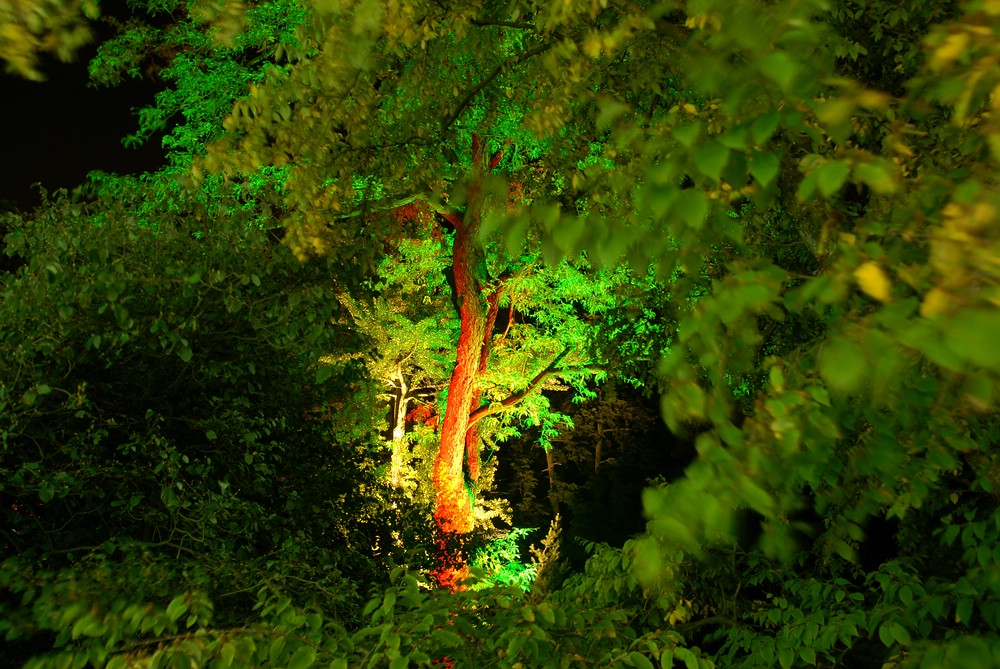 Botanischer Garten Wuppertal im Lichterglanz (II)