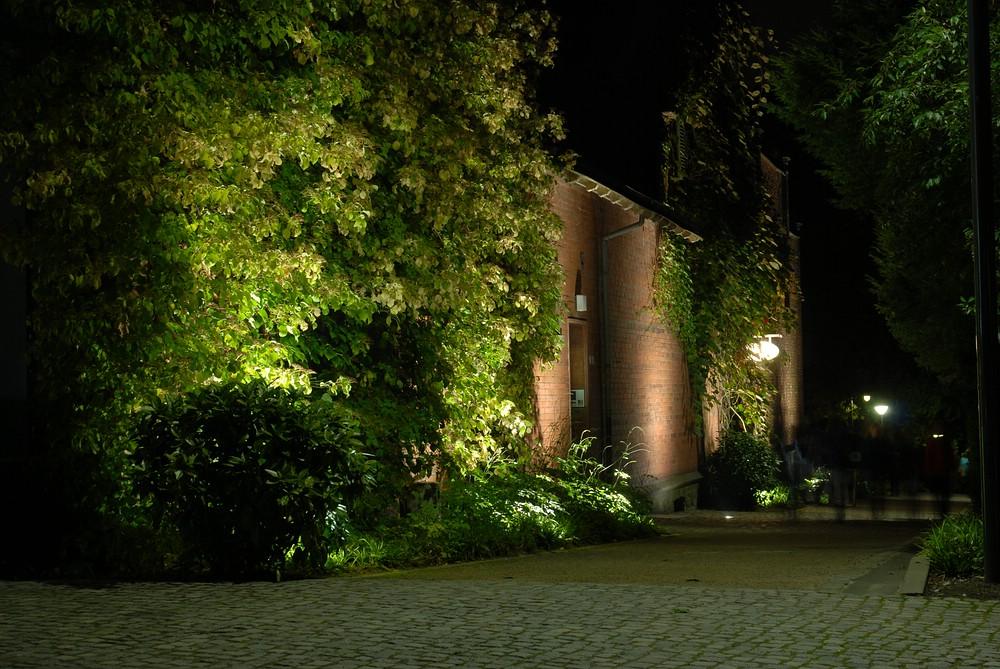 Botanischer Garten Wuppertal im Lichterglanz (III)