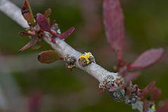Botanischer Garten ZH Mai 2011...