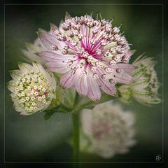 Botanischer Obstgarten - unbekannte Blüte