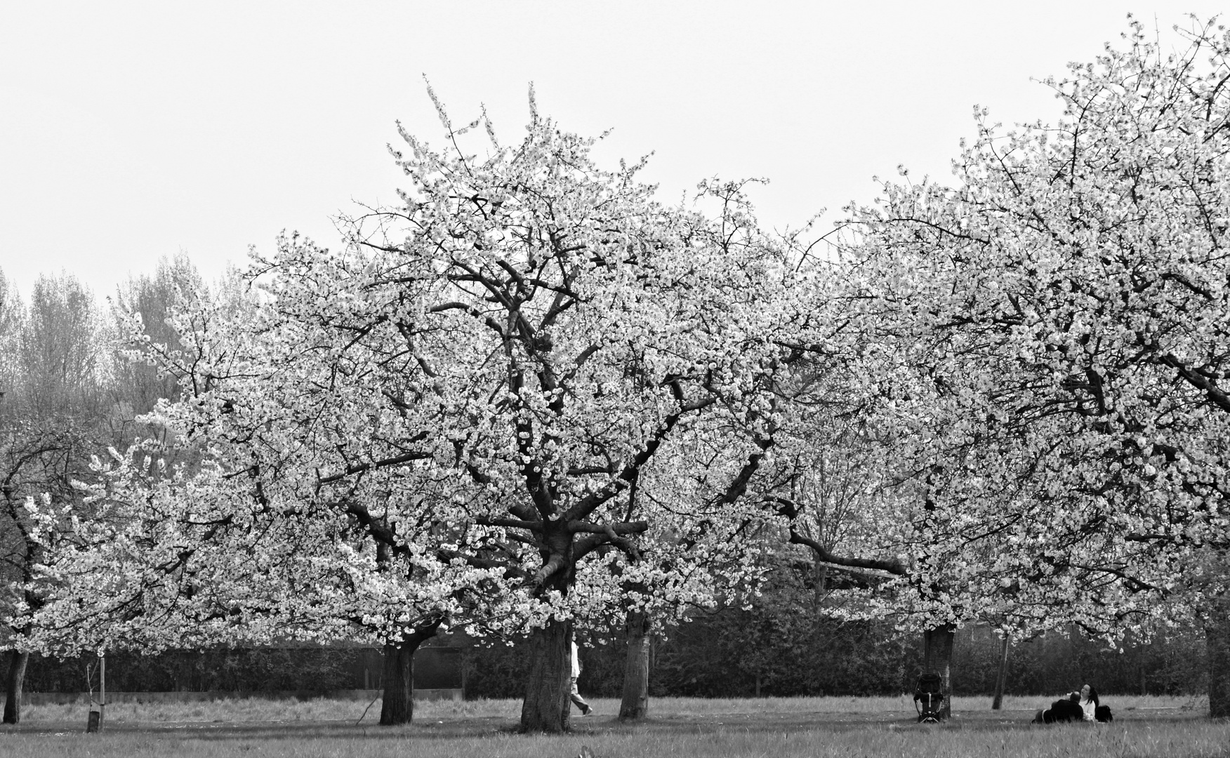 Pankow bärlauch volkspark botanischer Way History: