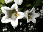 ... Botanisches Rätsel