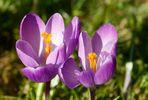 Boten des Frühlings