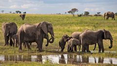 Botswana - Chobe Nationalpark (28)