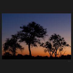 Botswana morning