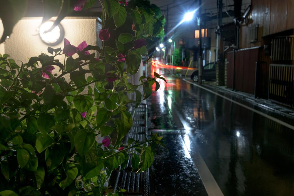 Bougainvillea in the rain
