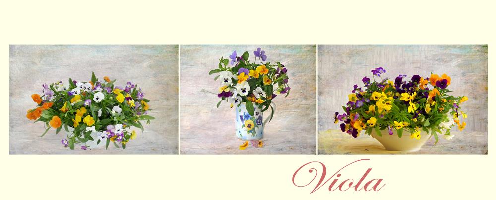 Bouquet aus Hornveilchen