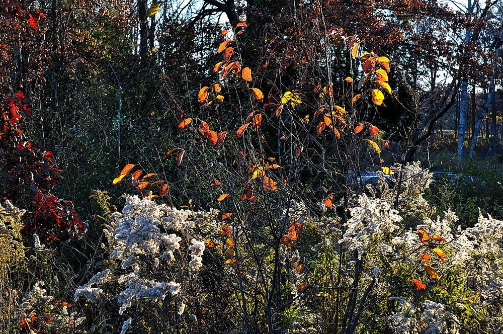 Bouquet d'automne 2010