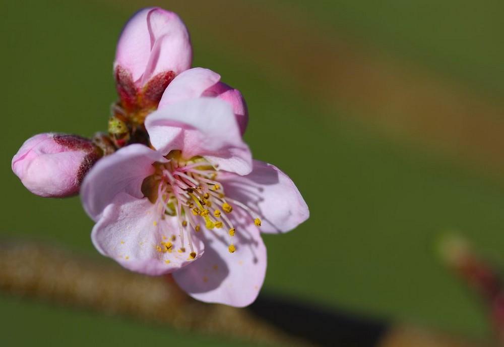 Bourgeons de printemps...