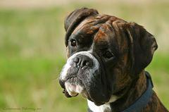 Boxer-Vielfalt XIV: Der Spiegel ...