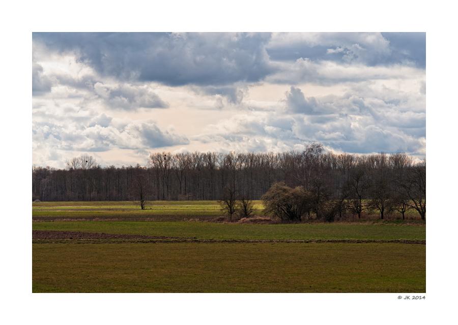 Brachvogelland