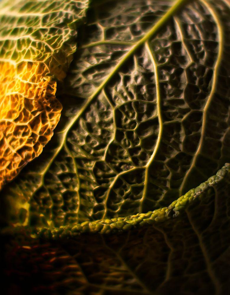 brain.drain.cabbage