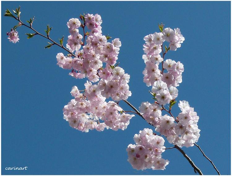 Branche vaporeuse / Duftiger Zweig