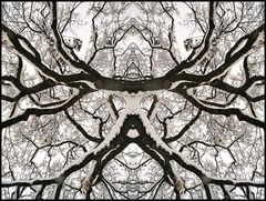 Branched Fantasies - Sauron