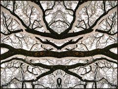 Branched Fantasies - The Mirkwood
