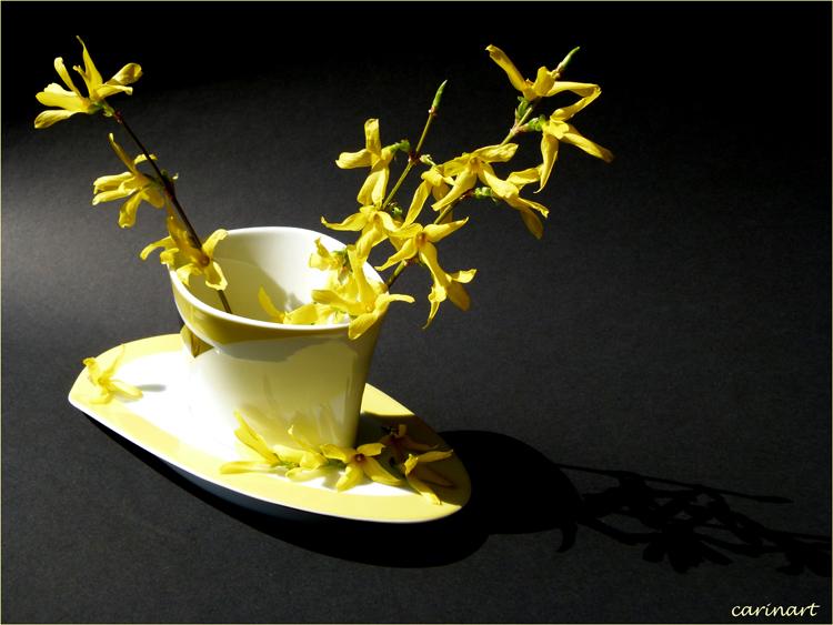 Branches étoilées / Sternenzweige