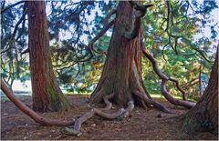 Branches ou racines?