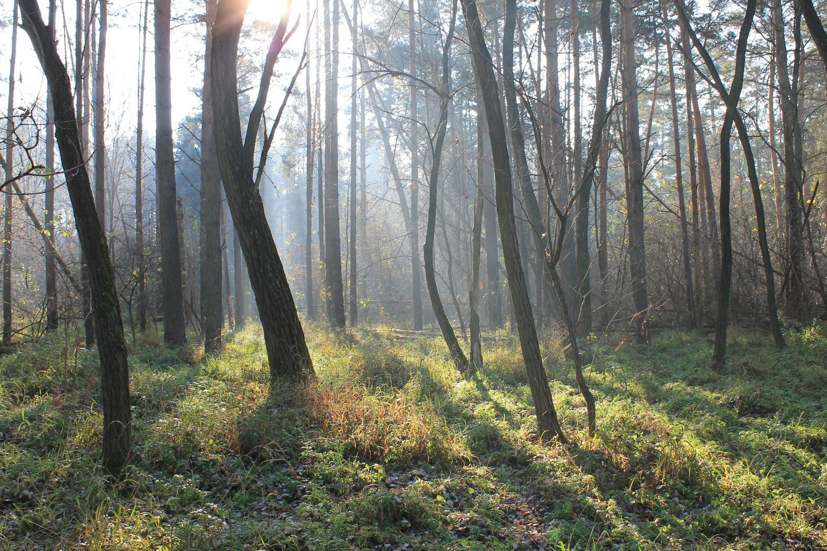 Brandenburger Wald