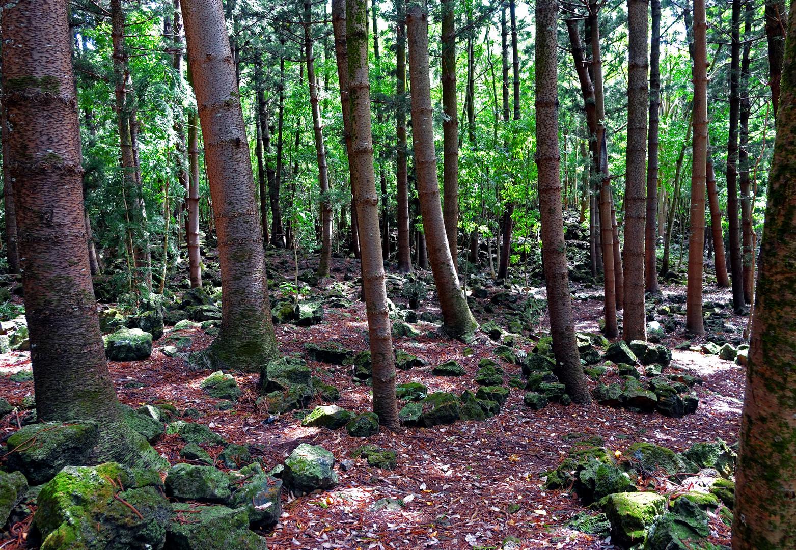 Bras d'Eau National Park'19