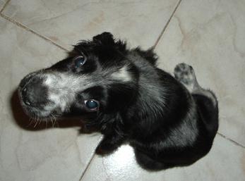 Brasilian Dog ;o)