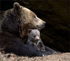 Braunbär mit Junges