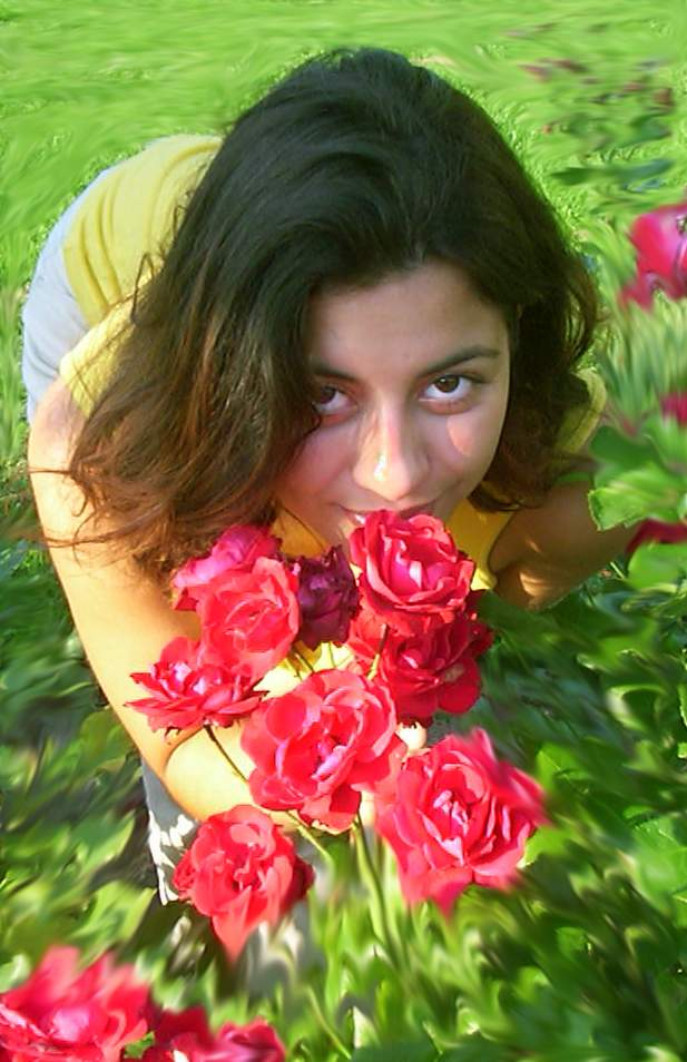 Braune Rose