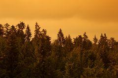 Brauner Wald