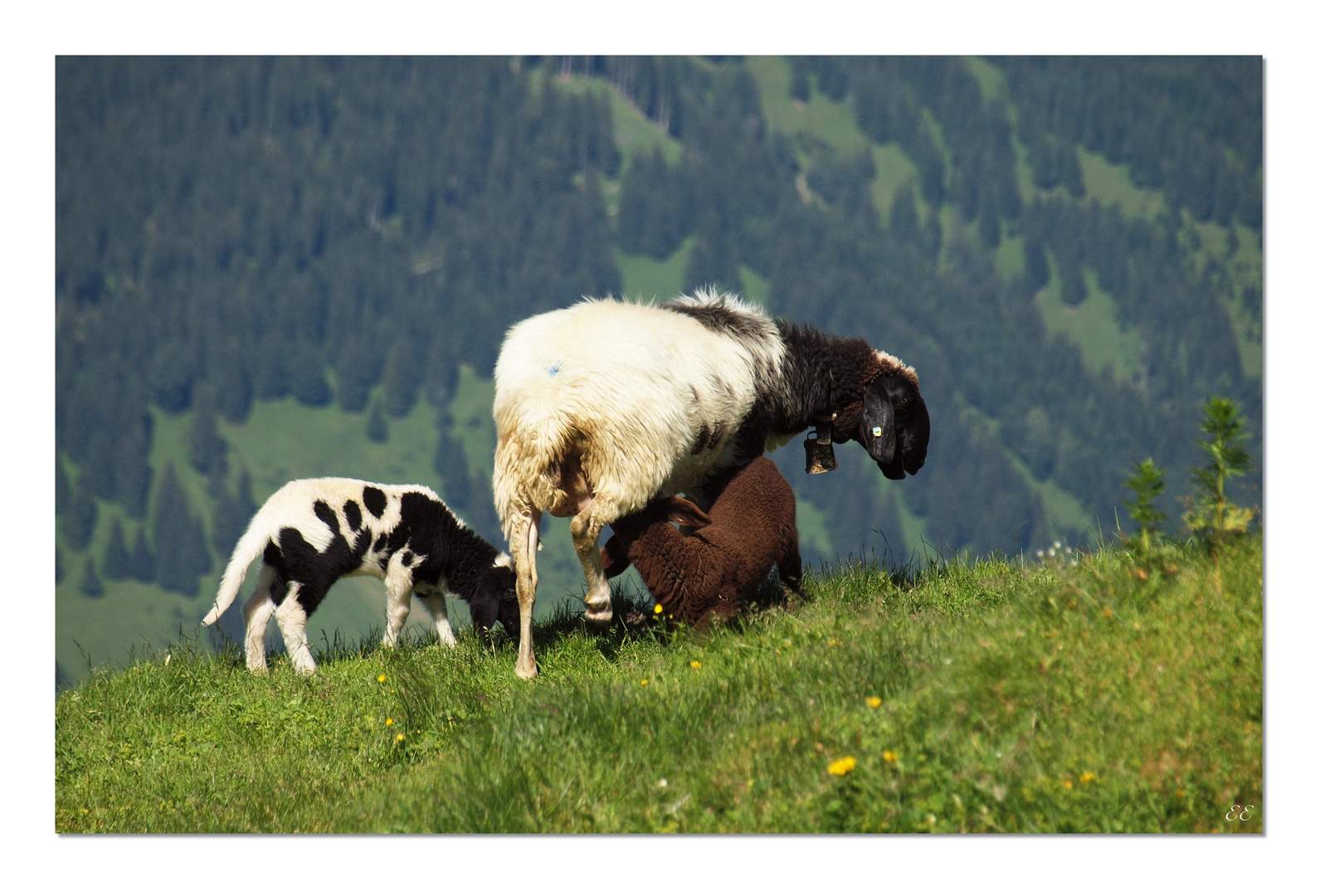 the latest ec31c ea75e braun/weiße oder schwarz/weiße Pullover? Foto & Bild | tiere ...