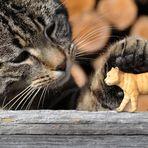 Braves Kätzchen!