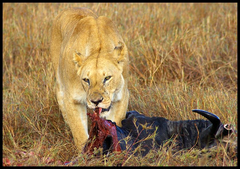 Breakfast @ Masai Mara