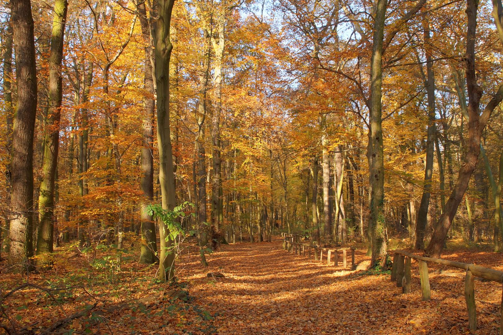 Bredower Forst im Herbst