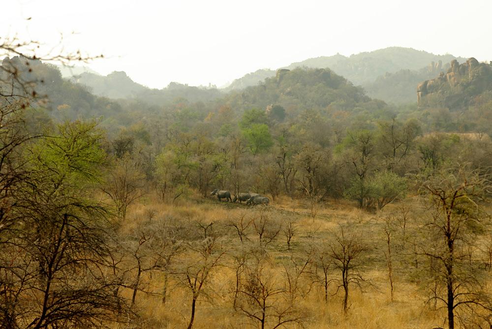 Breitmaulnashörner im Matobo National Park