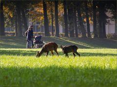 Bremen naturnah