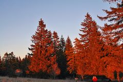 Brennende Bäume kurz vor Sonnenuntergang auf der Schwäbischen Alb