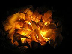 Brennende Herbstblätter ...
