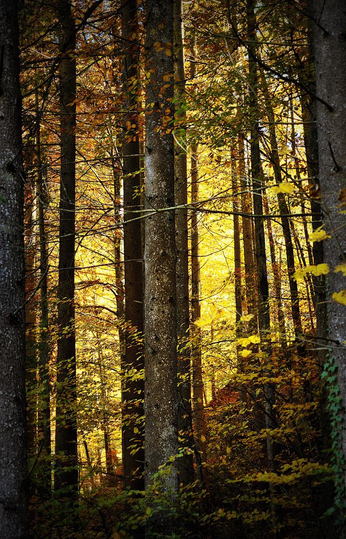 Brennender Wald