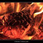 Brennender Zapfen