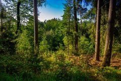 Breuberger Wald1