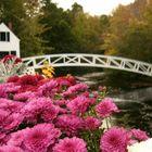 Bridge in Sommersville