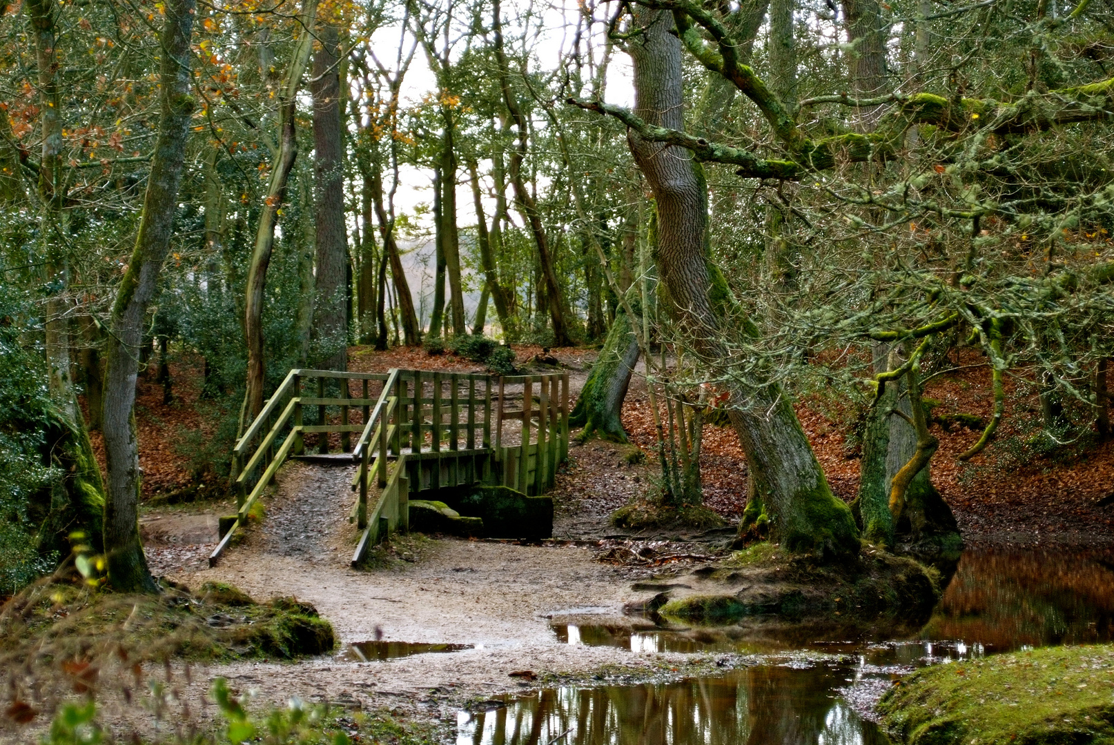 bridge in the new forest