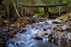 bridge over small river in the forest