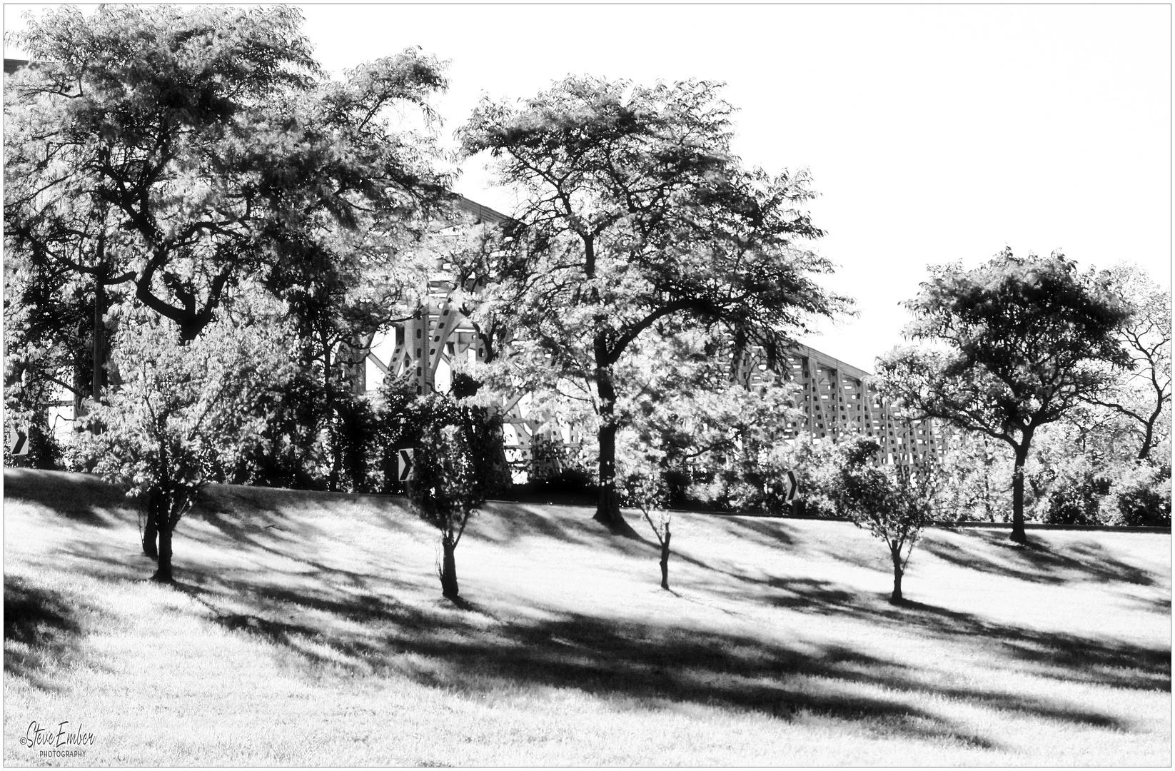 Bridge, Trees, Afternoon Shadows - A Baltimore Impression