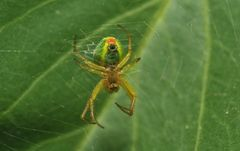 bright-couloured spider