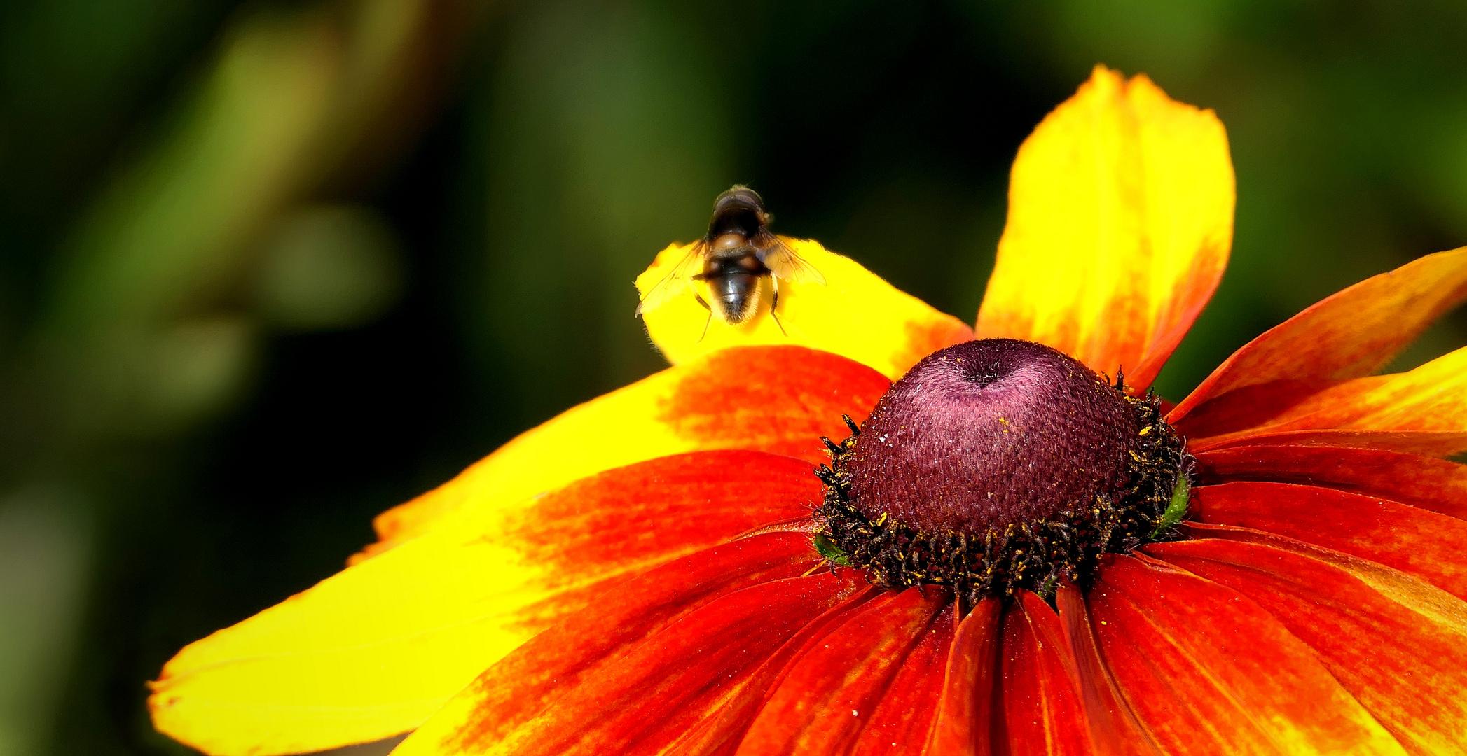 ... bright flower in the garden