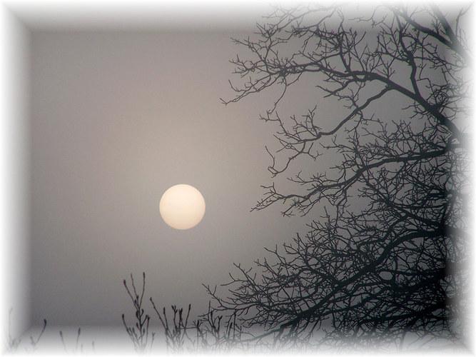 bright & foggy #3