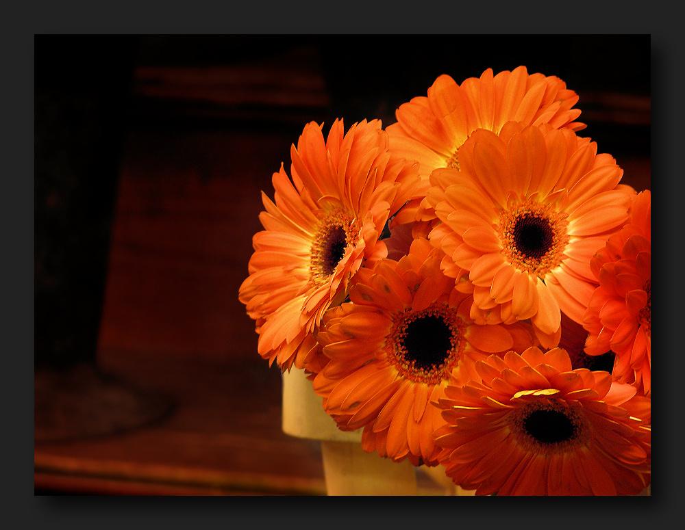 Bright orange gerber daisies