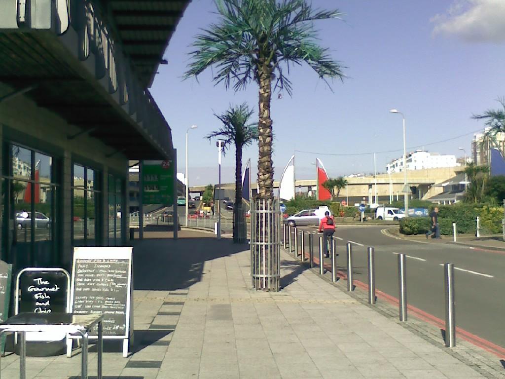 Brighton Palme