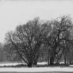 brilliant trees