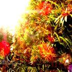 brillo de sol