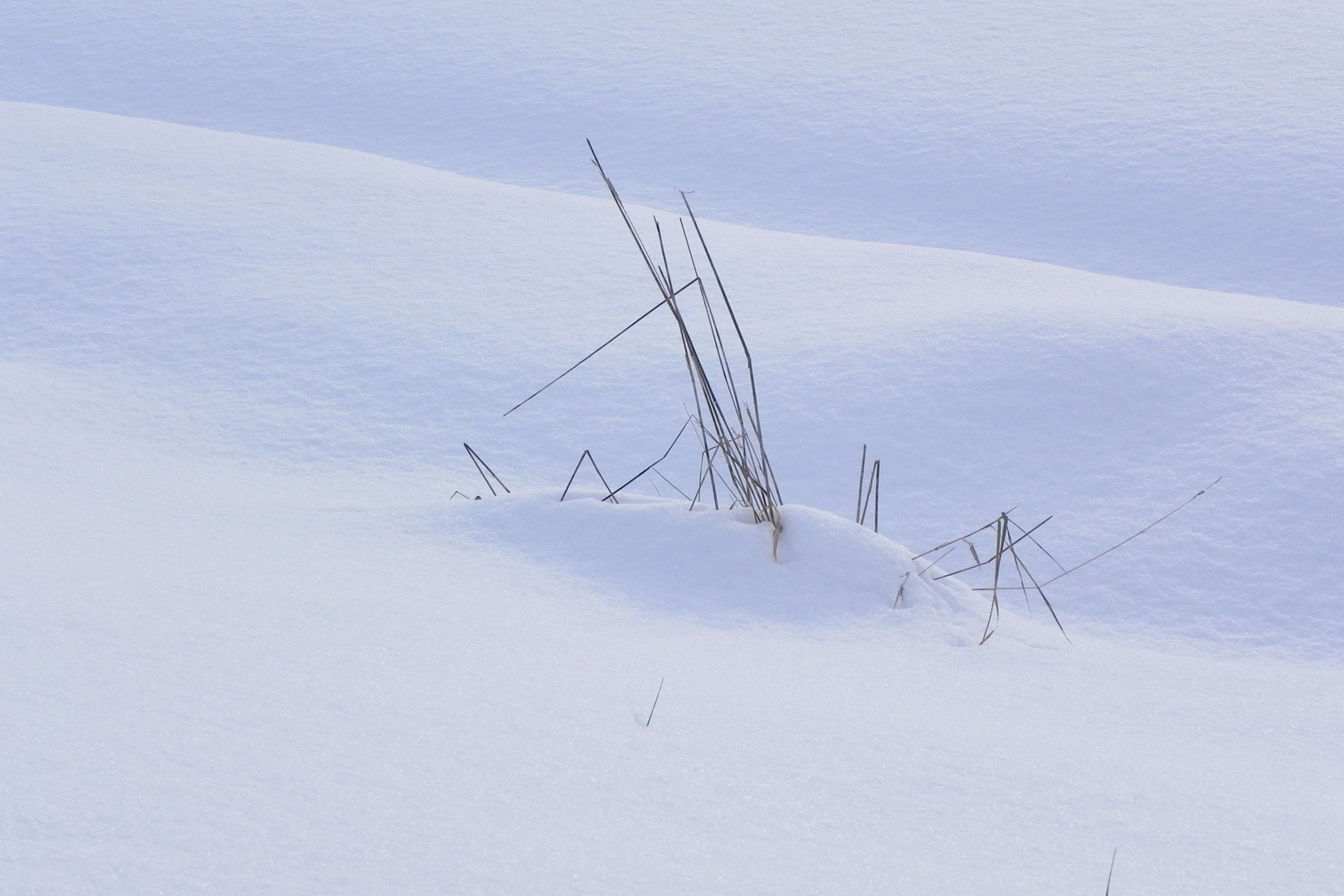 Brin d'herbe sous la neige